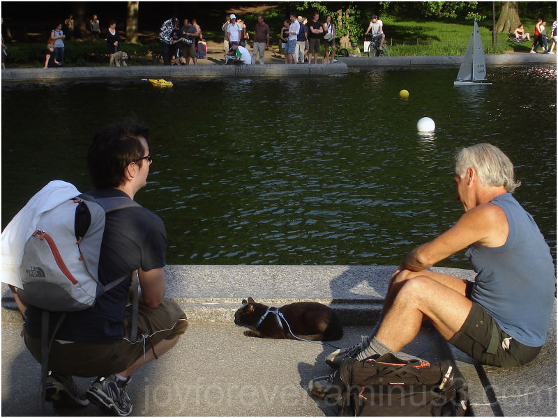 people central park water new york city sun cat