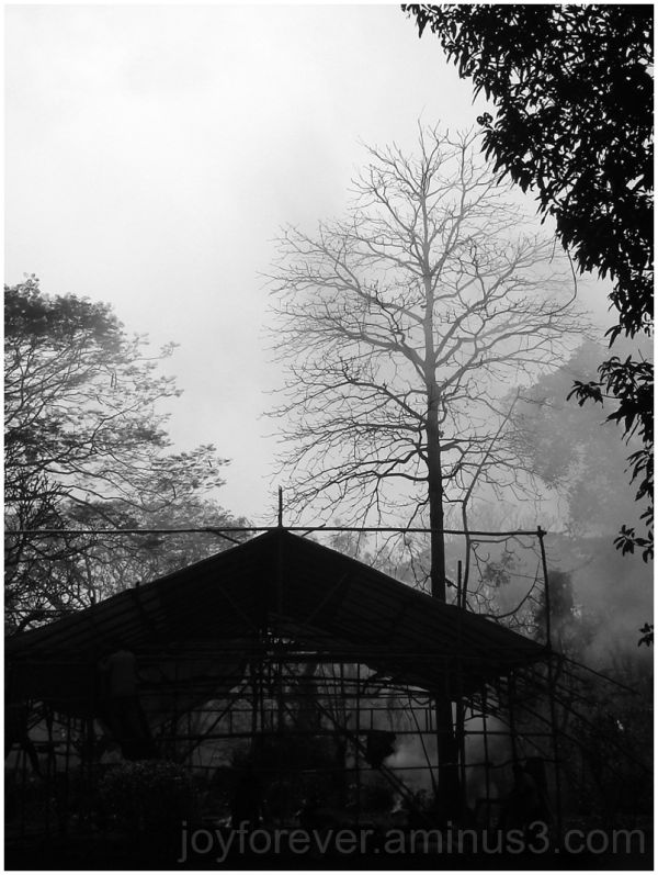 tree silhouette black white smoke fog branch tent