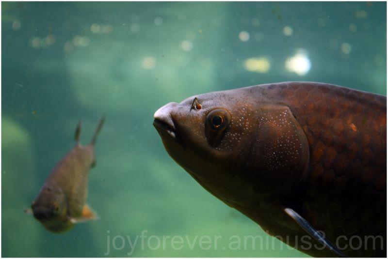 fish underwater macro close-up bronx-zoo