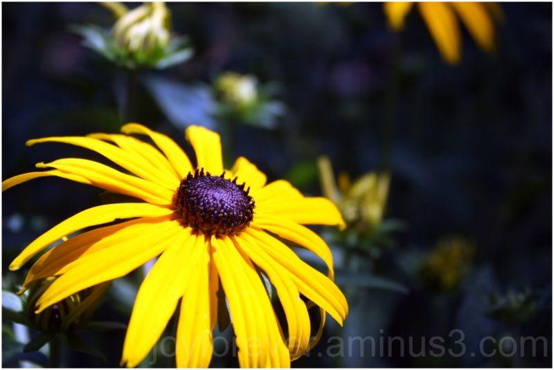 sun flower sunflower yellow macro close-up