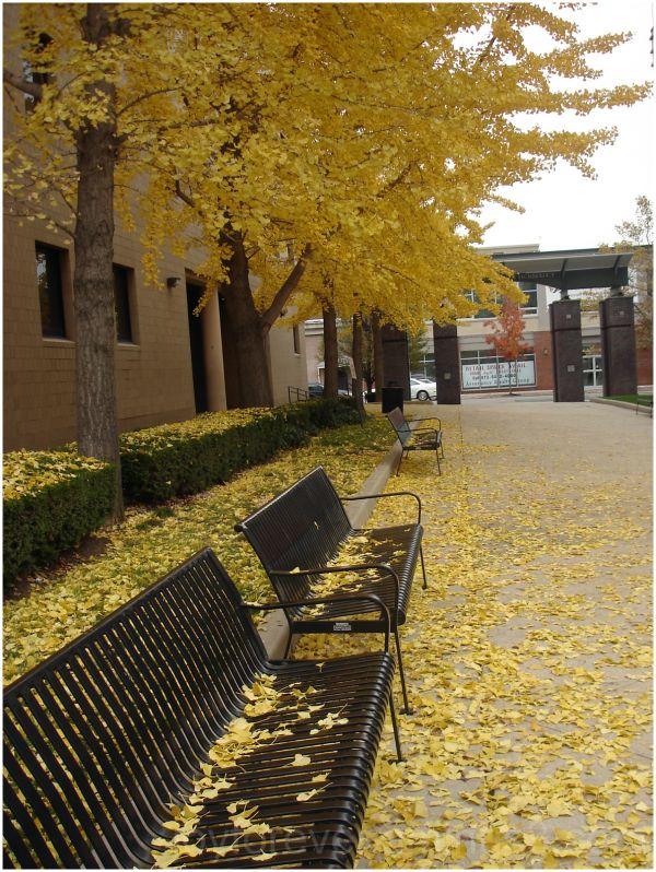 fall leaves NJIT bench Newark New-jersey yellow