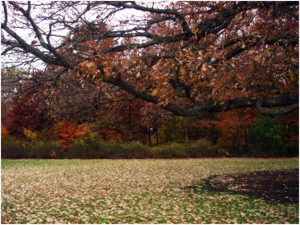 fall leaf oak plant nature autumn tree
