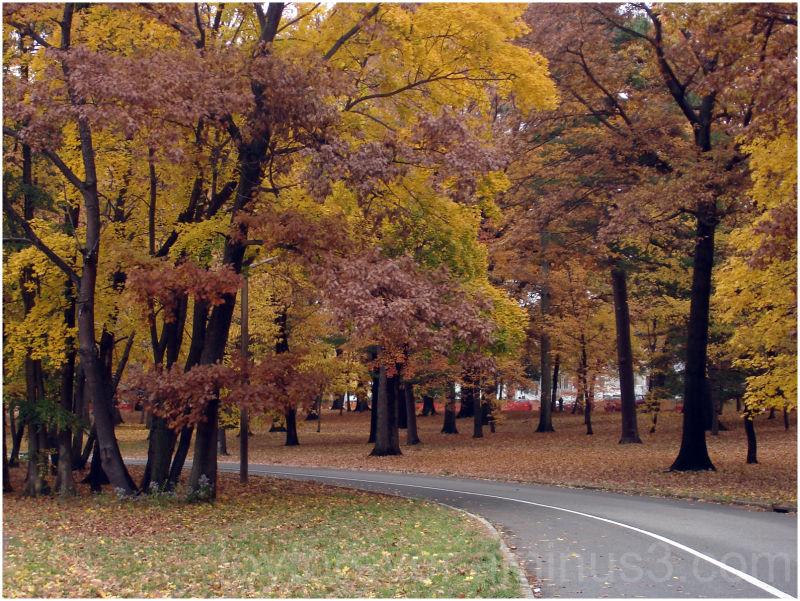fall leaf maple red road nature autumn tree newark