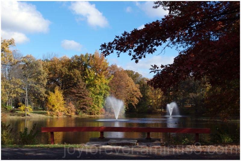 fall leaf red nature autumn tree lake fountain
