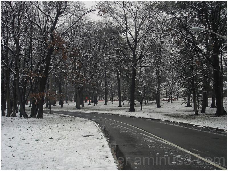 road nature winter tree newark branch-brook-park