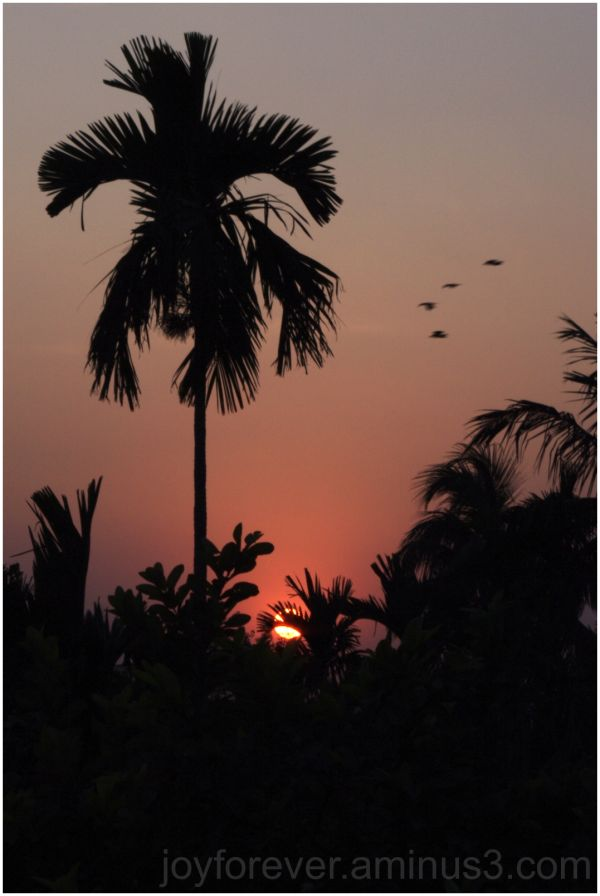 sunset Chandannagar india tree silhouette