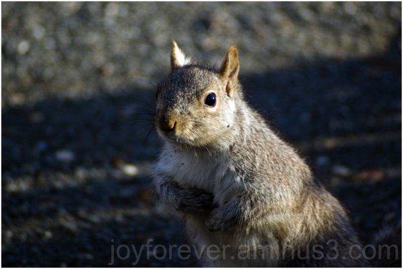 squirrel telephoto close-up animal rodent nature