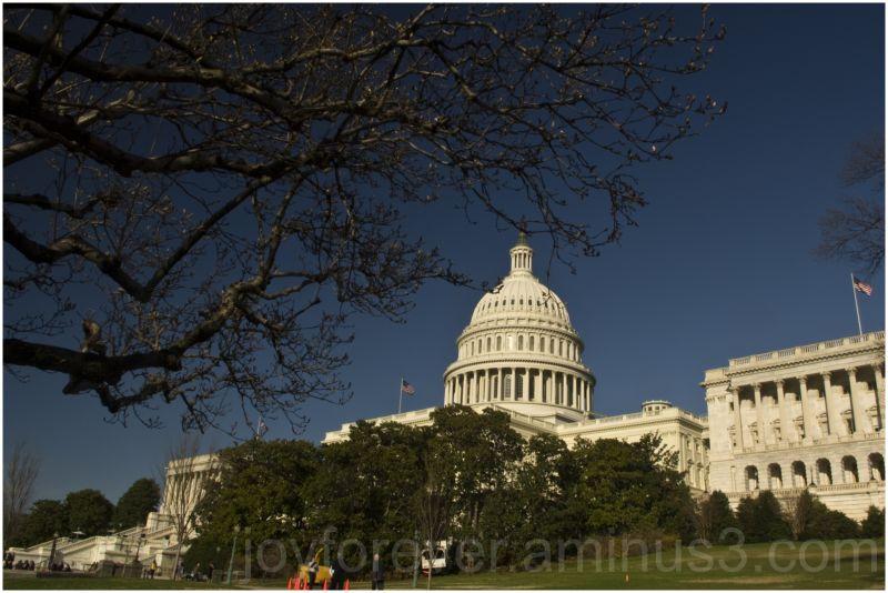 USA america Washington-DC Capitol building tree