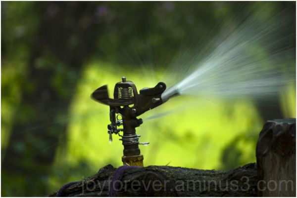 sprinkler water greenery irrigation bokeh