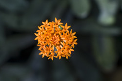 plant flower green orange depth-of-field