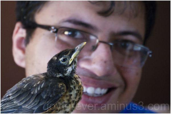 baby robin bird Twitter close-up