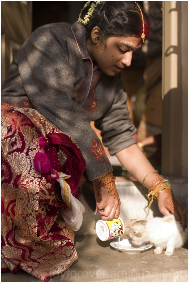 bride wedding bengal india jewels sari kitten milk
