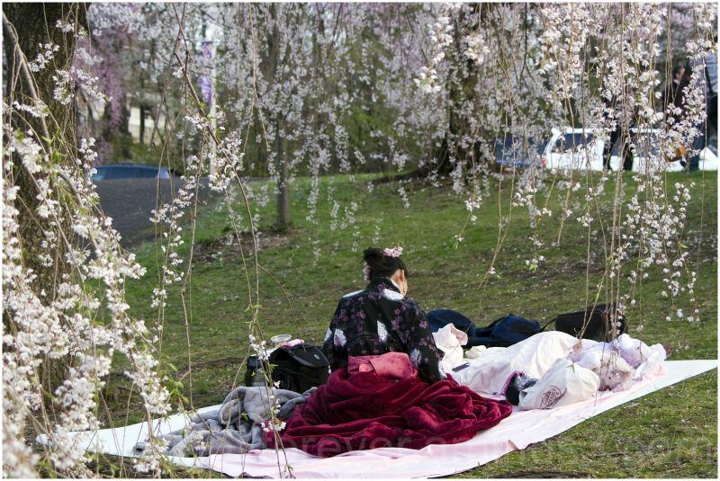 cherry blossoms Branch-Brook-Park Newark kimono