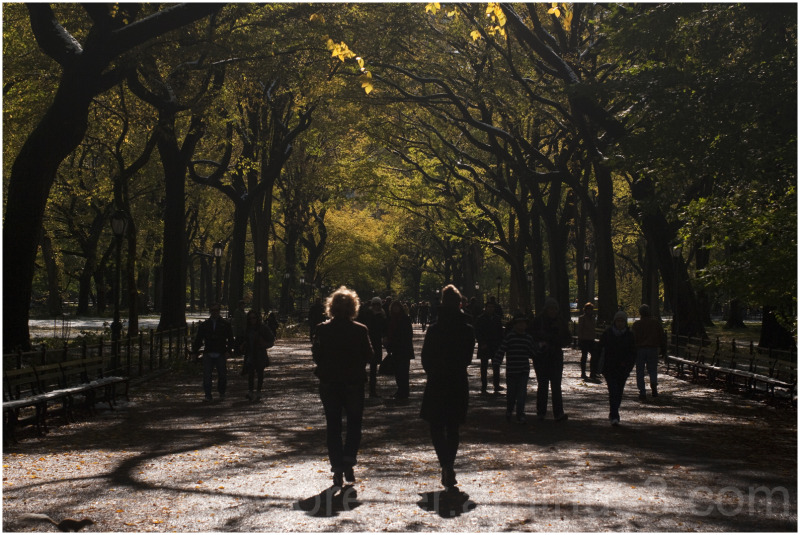 central-park mall road trees new-york sunlight