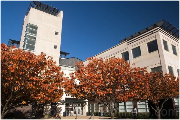 fall foliage cherry tree NJIT Library Newark NJ