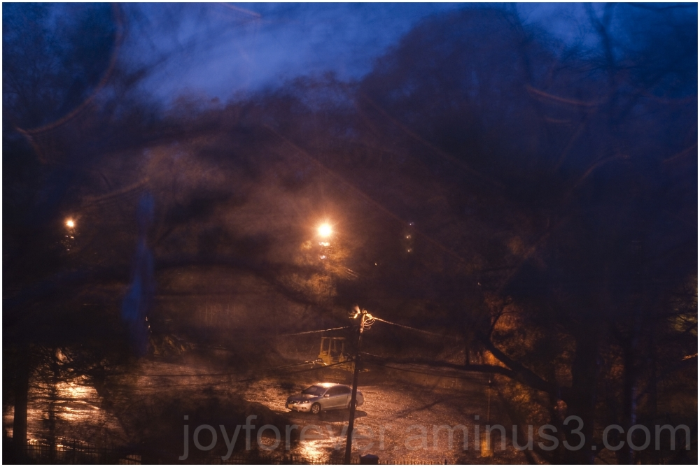 hurricane Sandy storm wind tree night blur rain NJ