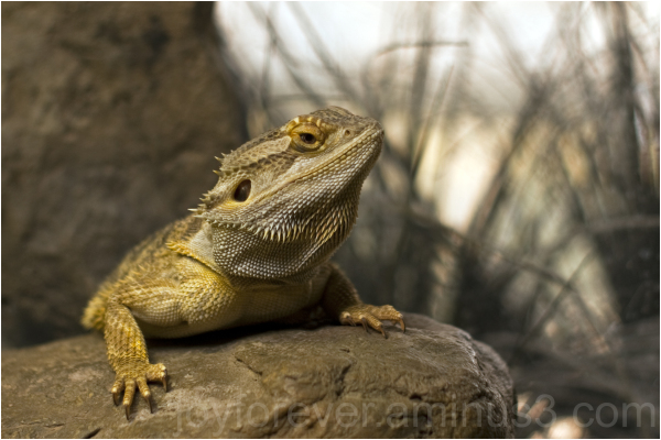 lizard reptile animal Baltimore National Aquarium
