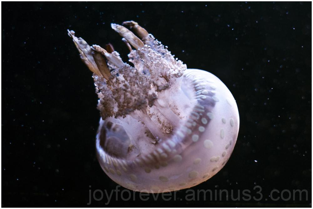 jellyfish Baltimore National-aquarium aquarium
