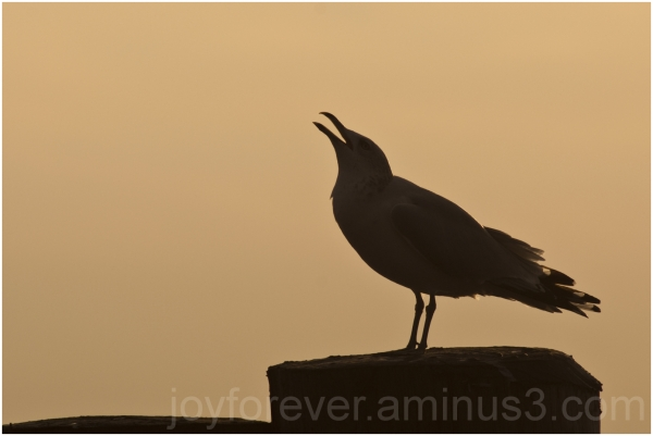 Battery-Park Manhattan New-York seagull silhouette