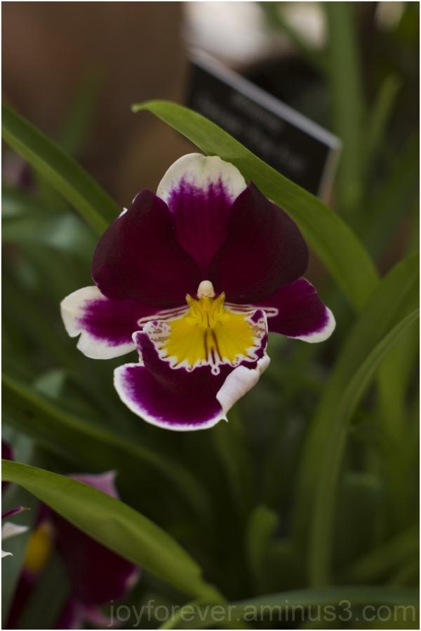 flower plant orchid Botanical-Garden DC color