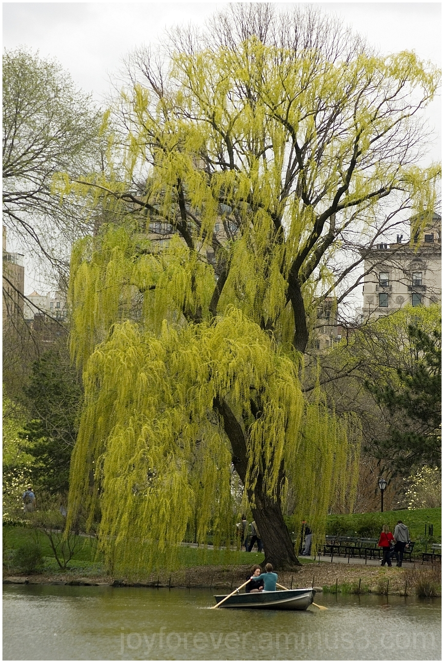 weeping willow tree hanging lake boat plant water