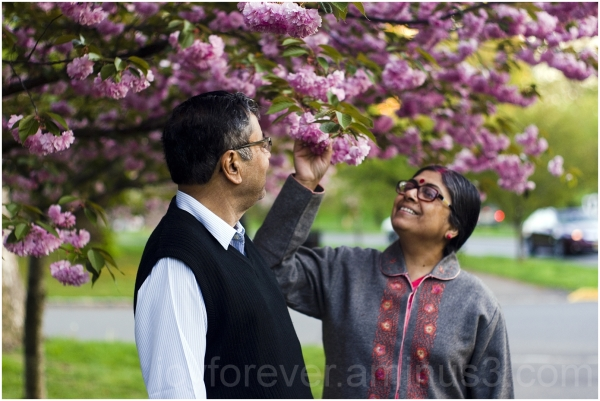 father mother parents cherry blossoms pink flowers