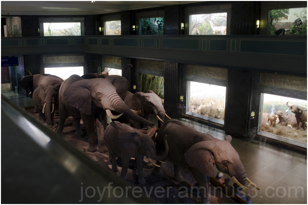 elephant museum animal Africa mammal NYC AMNH
