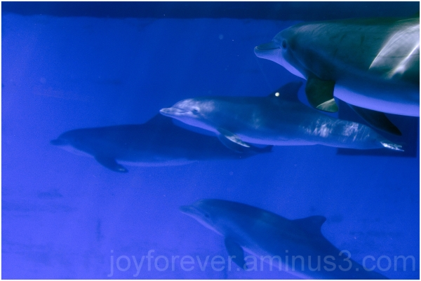 Dolphin water underwater blue mammal animal
