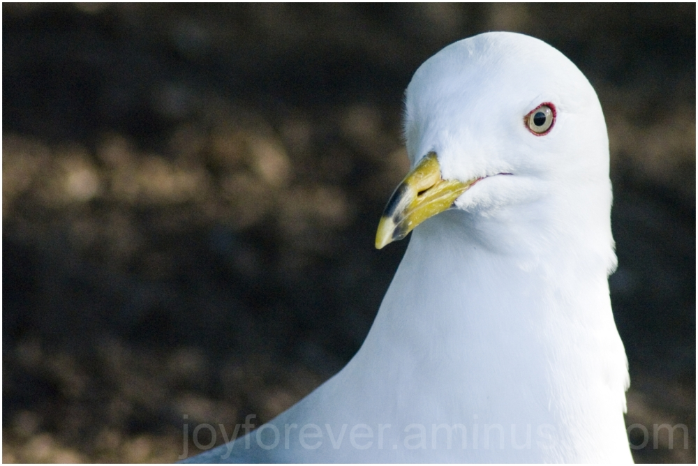 water gull bird mist waterfall Niagara falls USA