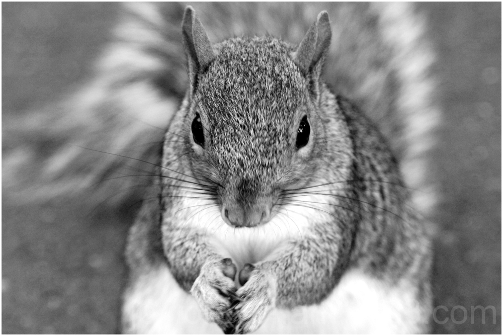 squirrel animal mammal rodent black-and-white NYC