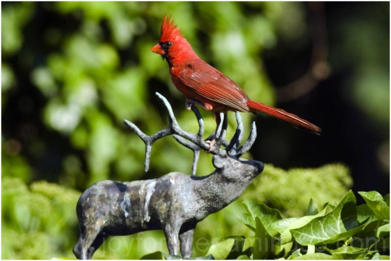 cardinal red bird sculpture elk deer antelope NYC