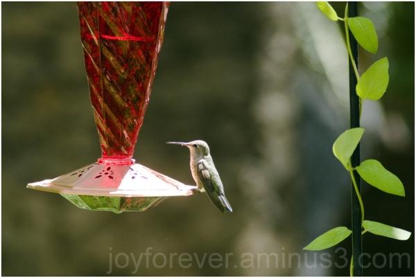 hummingbird bird las-vegas Flamingo hotel casino