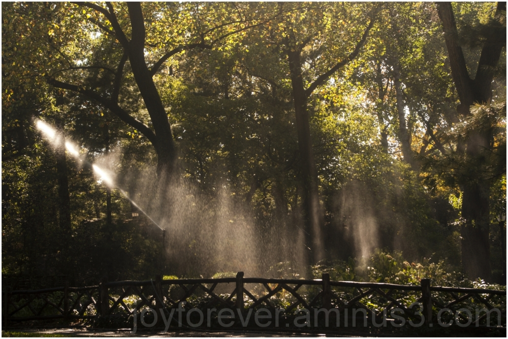Sunlight sprinkler tree forest park water drop NYC