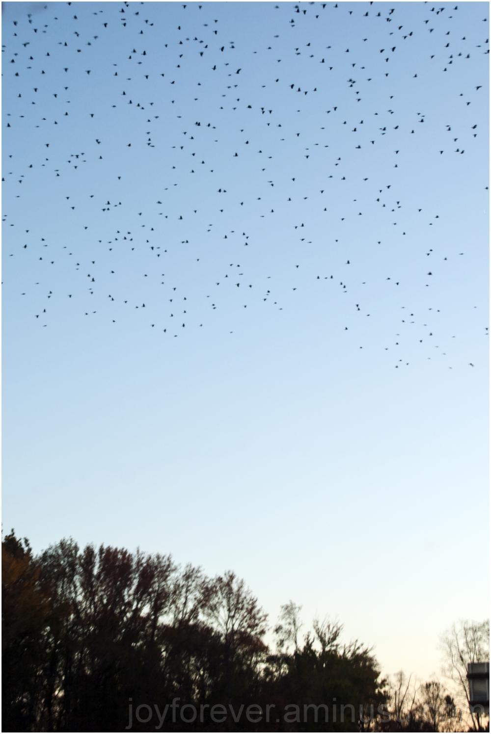 bird flock fly evening sky trees