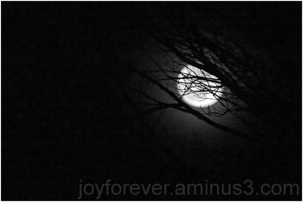moon tree dark night branches black-and-white