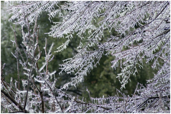 ice tree frost snow water winter weather cold