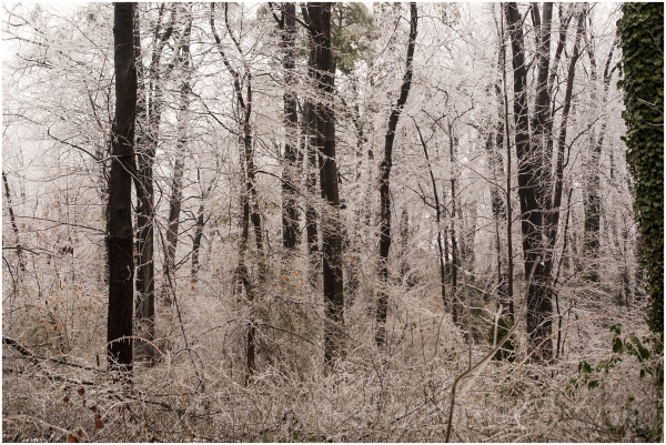 ice tree frost snow forest winter weather cold