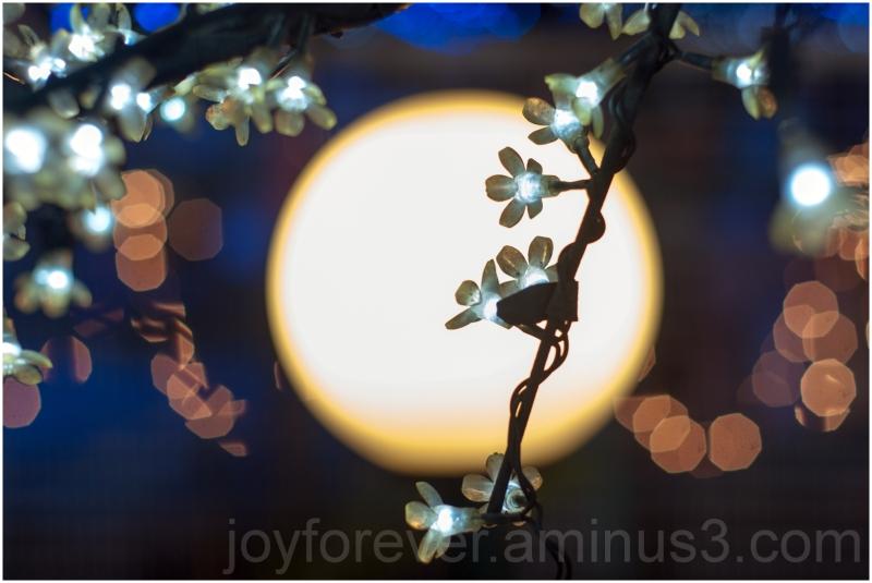 light bokeh celebration flower moon