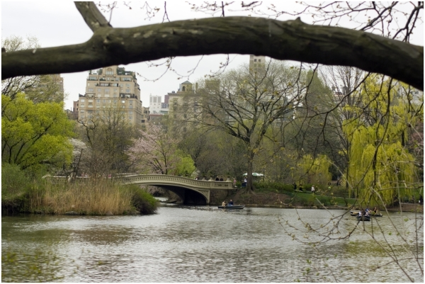spring bow-bridge lake new-york-city manhattan NYC