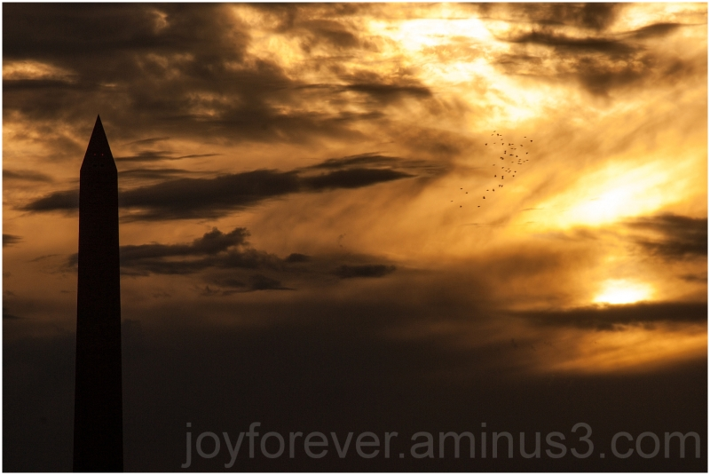 Washington DC Monument sunset cloud birds sky