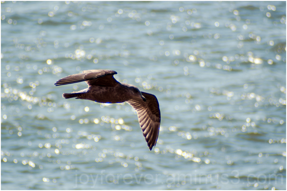 seagull gull bird flight flying NYC river bokeh