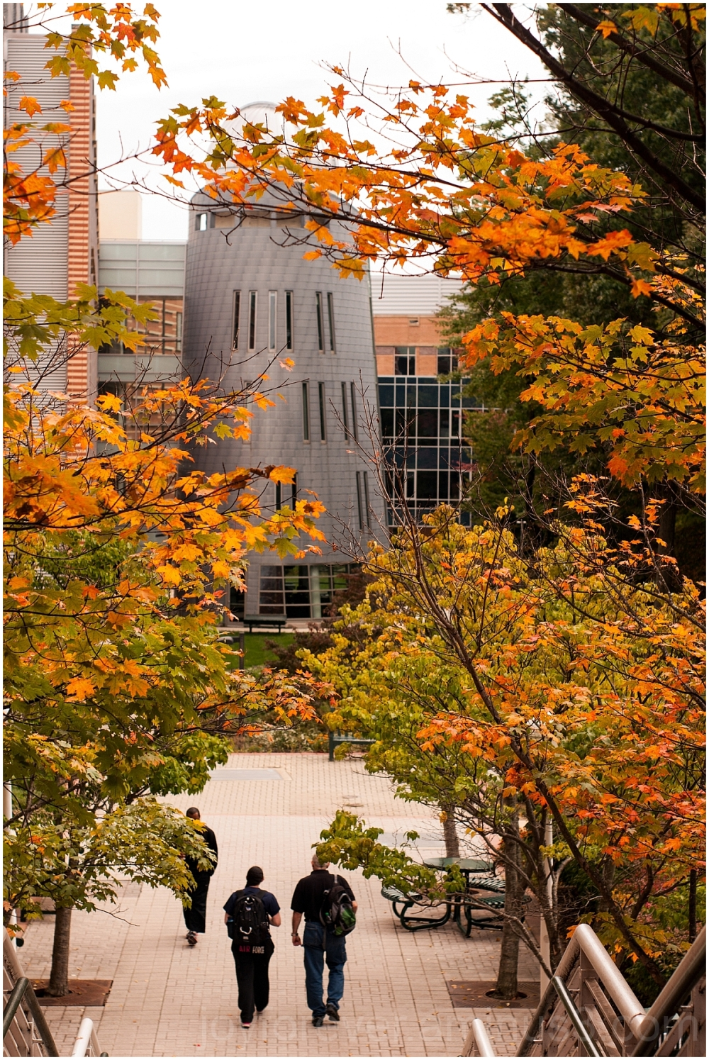 GMU Fall foliage leaves maple Mason Fairfax VA