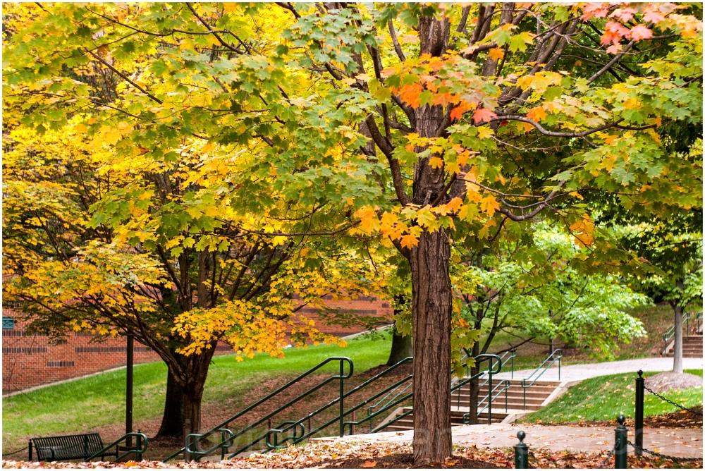 GMU Fall foliage leaves maple Mason Fairfax VA