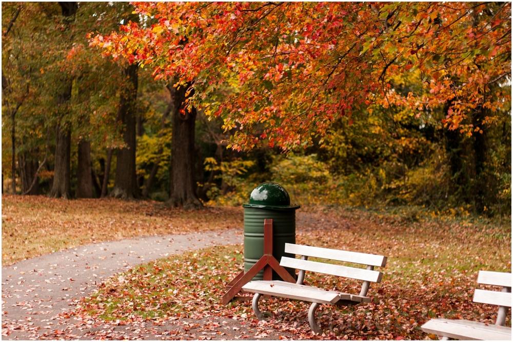 fall foliage color trees orange falls-church VA