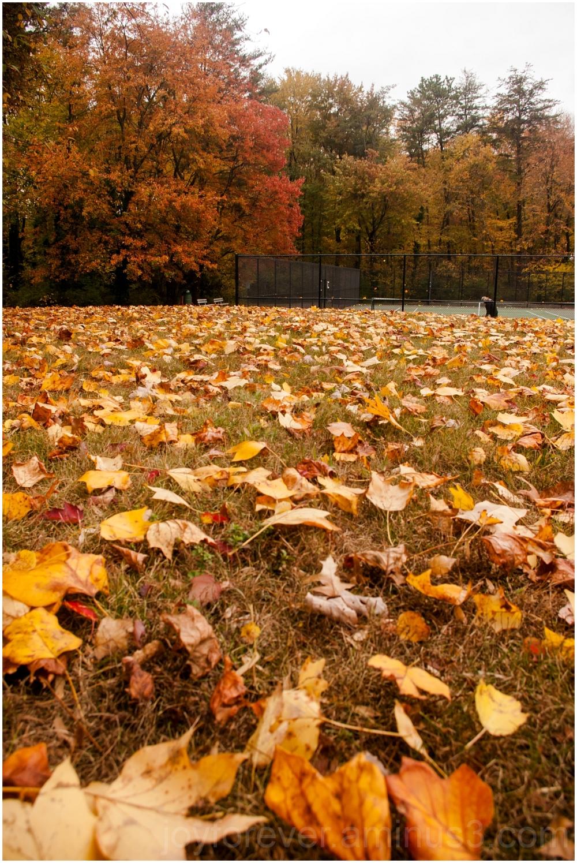 Fall foliage color trees yellow Falls-Church VA