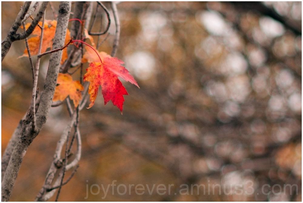 fall foliage color trees orange falls-church leaf