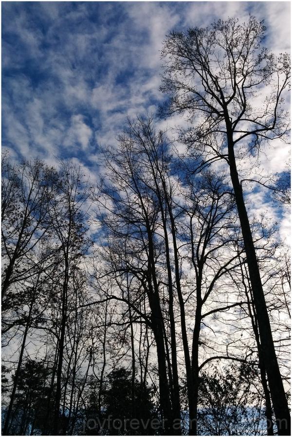 sky trees cloud fall winter