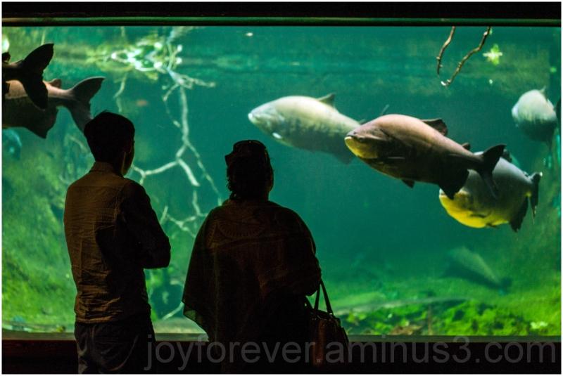Fish zoo aquarium Washington-DC water silhouette
