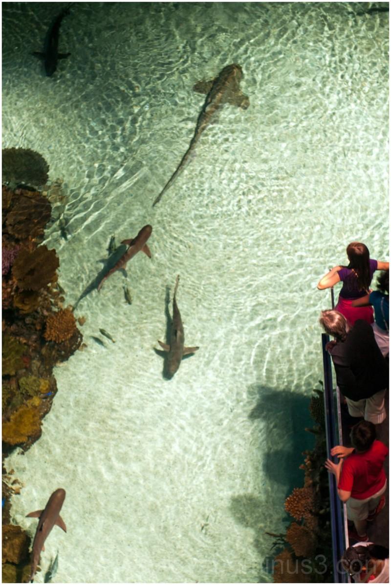 National Aquarium Baltimore shark fish water