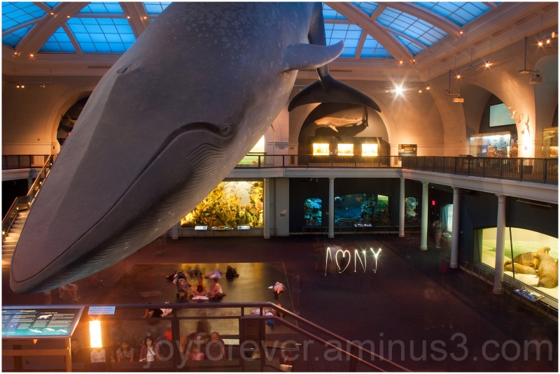Blue Whale ocean Museum Natural History New-York